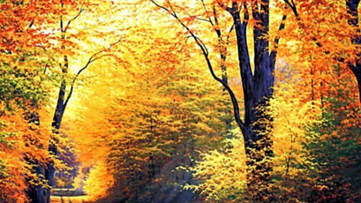 TOURIST EXPERIENCES AND GASTRONOMY IN AUTUMN